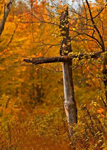 autumn-cross-john-vose